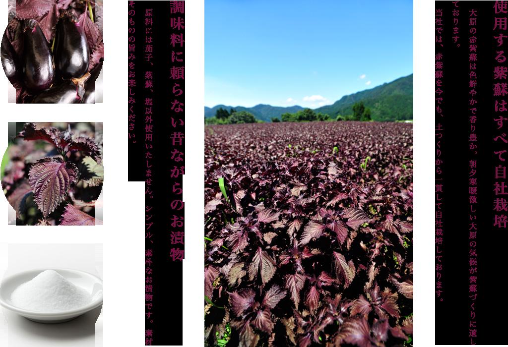 大原の生しば漬とは? 使用する紫蘇はすべて自社栽培  大原の赤紫蘇は色鮮やかで香り豊か。朝夕寒暖激しい大原の気候が紫蘇づくりに適しております。 当社では、赤紫蘇を今でも、土つくりから一貫して自社栽培しております