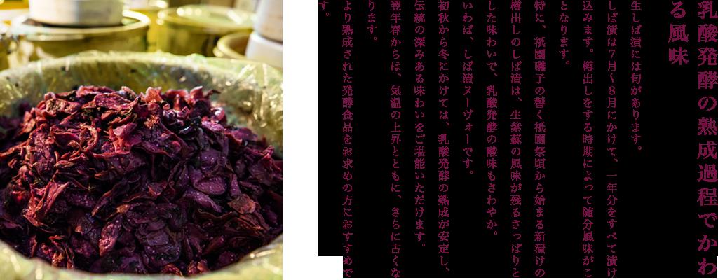乳酸発酵の熟成過程でかわる風味  生しば漬には旬があります。  しば漬は7月〜8月にかけて、一年分をすべて漬け込みます。樽出しをする時期によって随分風味がことなります。  特に、祇園囃子の響く祇園祭頃から始まる新漬けの樽出しのしば漬は、生紫蘇の風味が残るさっぱりとした味わいで、乳酸発酵の酸味もさわやか。いわば、しば漬ヌーヴォーです。  初秋から冬にかけては、乳酸発酵の熟成が安定し、伝統の深みある味わいをご堪能いただけます。  翌年春からは、気温の上昇とともに、さらに古くなります。より熟成された発酵食品をお求めの方におすすめです